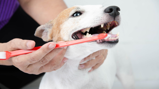 pet dental hygiene facts from Spring Creek Animal Hospital in Tomball, TX